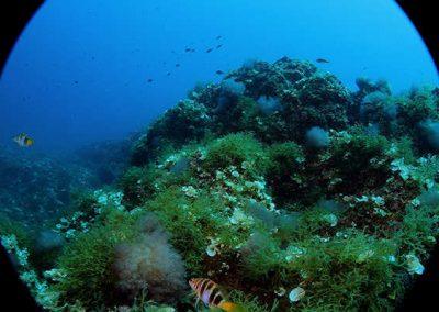 immersione - lsecca scirocco - gallipoli01