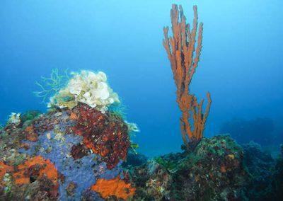 immersione - punta lea - gallipoli01