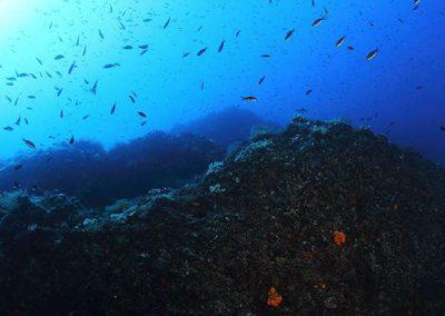 immersione - secca di ponente - gallipoli01