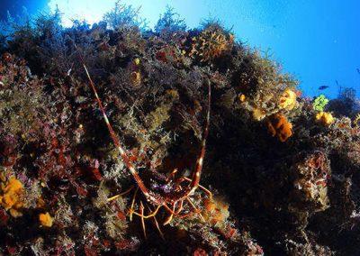 immersione - secca di ponente - gallipoli02