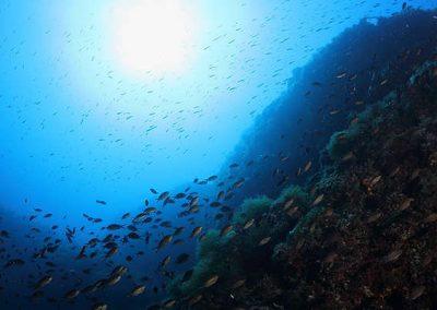 immersione - secca di ponente - gallipoli03